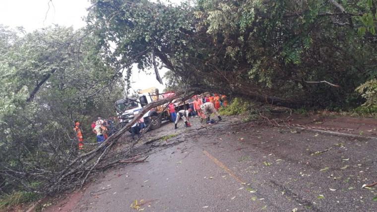 A queda de uma árvore também deixou o transito interditado na TO-080
