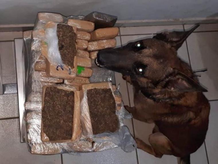As ações contaram com cães farejadores
