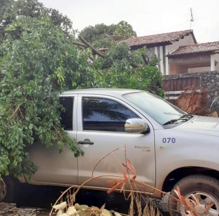 A chuva forte derrubou árvores,alagou ruas e causou prejuízos aos moradores