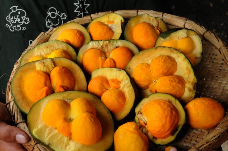 Segundo a Emater, em breve todos acesso a fruta repaginada