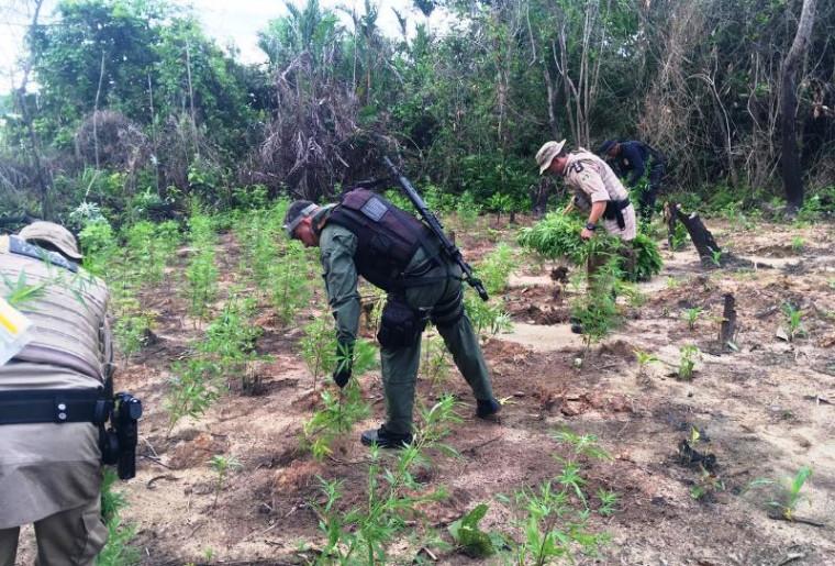 Policiais na plantação