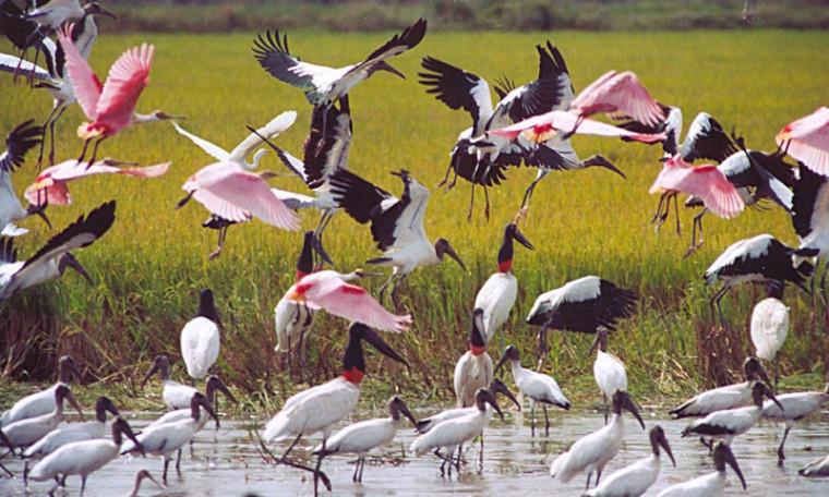 egião do Cantão possui cerca de 500 espécies de aves