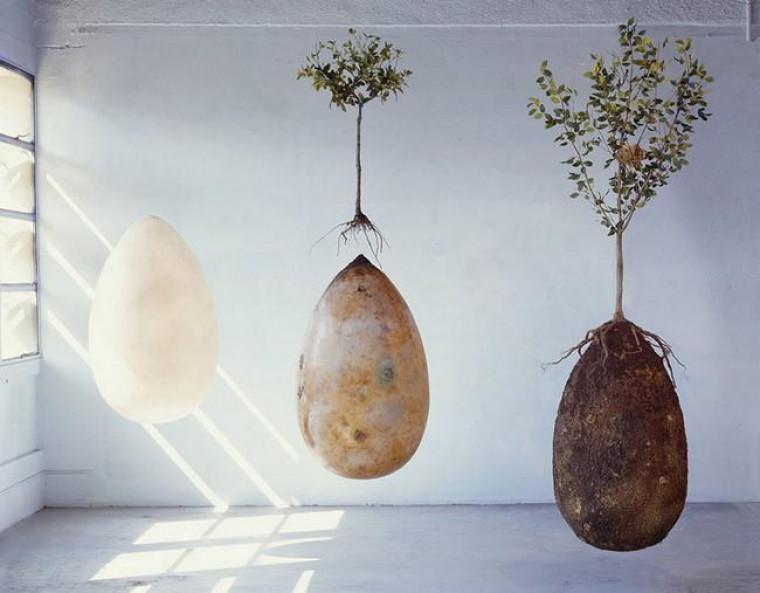 O cliente pode ainda escolher que tipo de árvore será plantada sobre sua cápsula