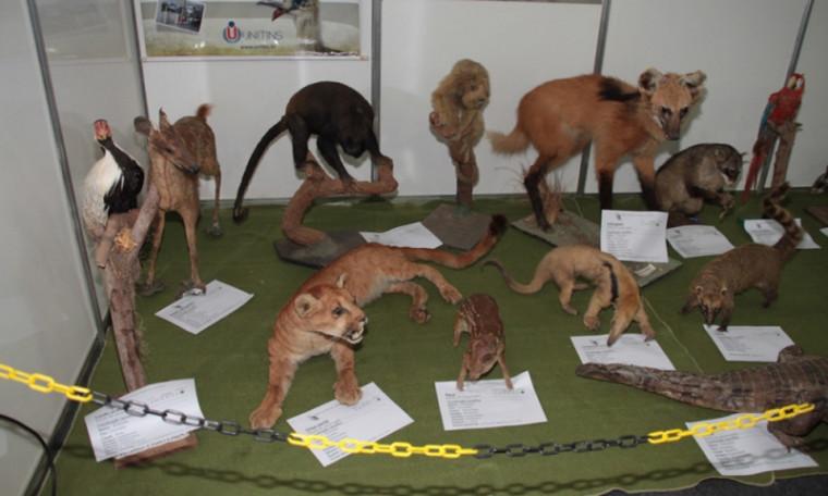 Museu de Zoologia e Taxidermia