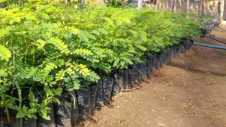 A empresa vai comprar mudas de plantas nativas e doar ao Viveiro Municipal