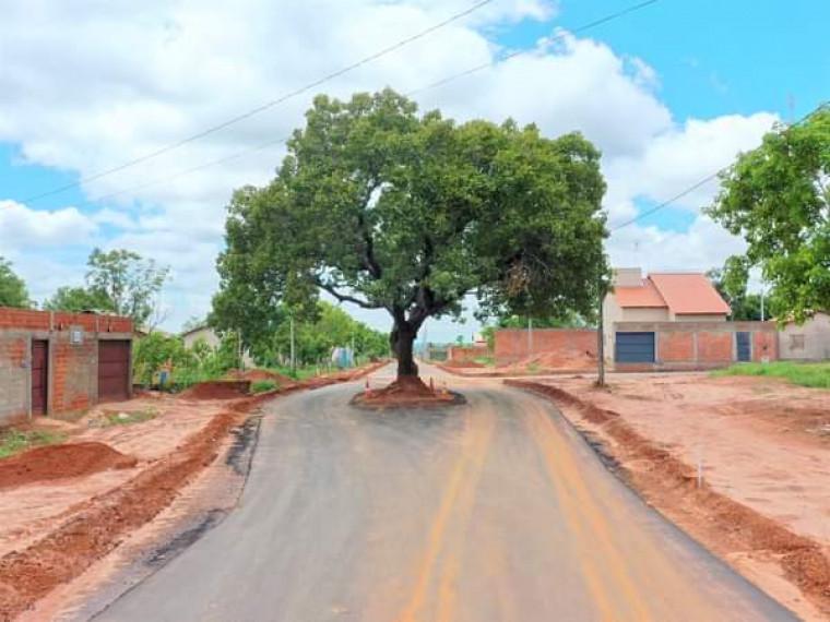 Os moradores aprovaram a iniciativa de preservar a árvore
