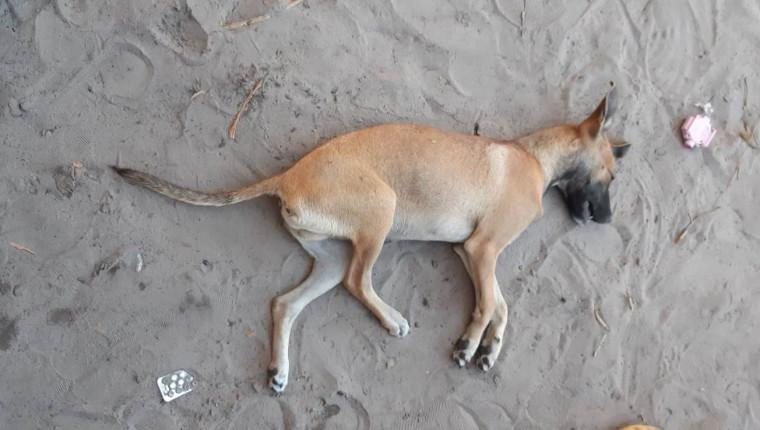 O autor sufocou o animal até a morte