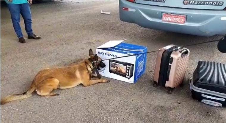 Cão ao lado do forno com a droga
