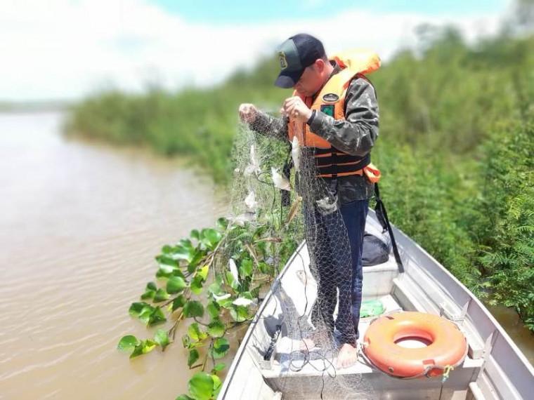 Peixes presos em rede