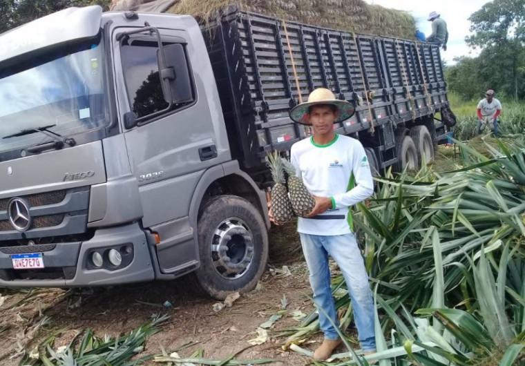 A produção de abacaxi já tem mercado certo