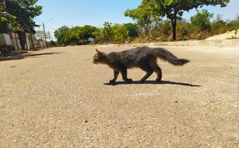 Felino no meio da rua