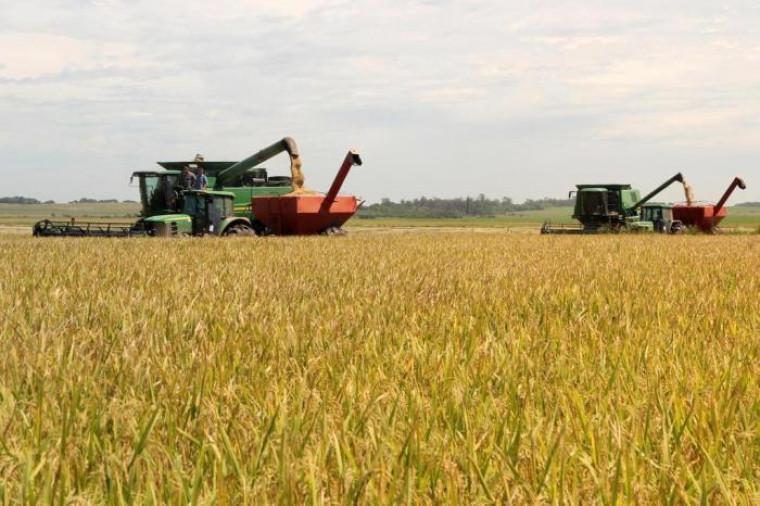 Uma das empresas é beneficiadora de arroz
