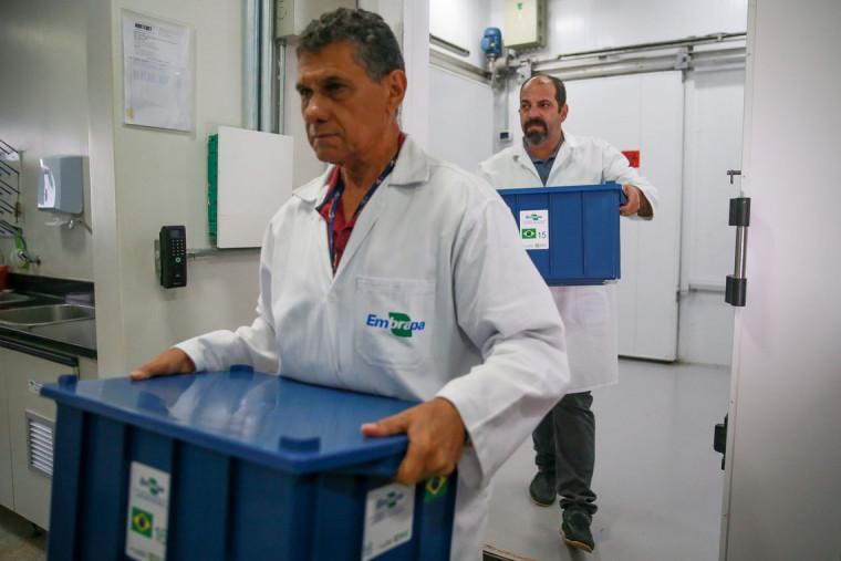 As sementes brasileiras devem chegar ao cofre no dia 25 de fevereiro