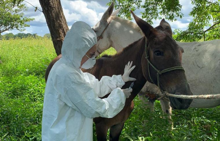 Animais com suspeita de infecção devem ser isolados e manuseados com EPIs adequados.