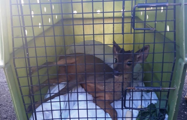 O resgate de animal silvestre deve ser solicitado a um órgão ambiental