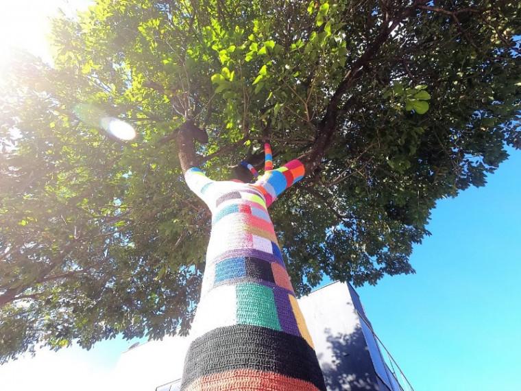 Pé de ipê fica na Avenida Prefeito João do Sousa Lima, no Centro