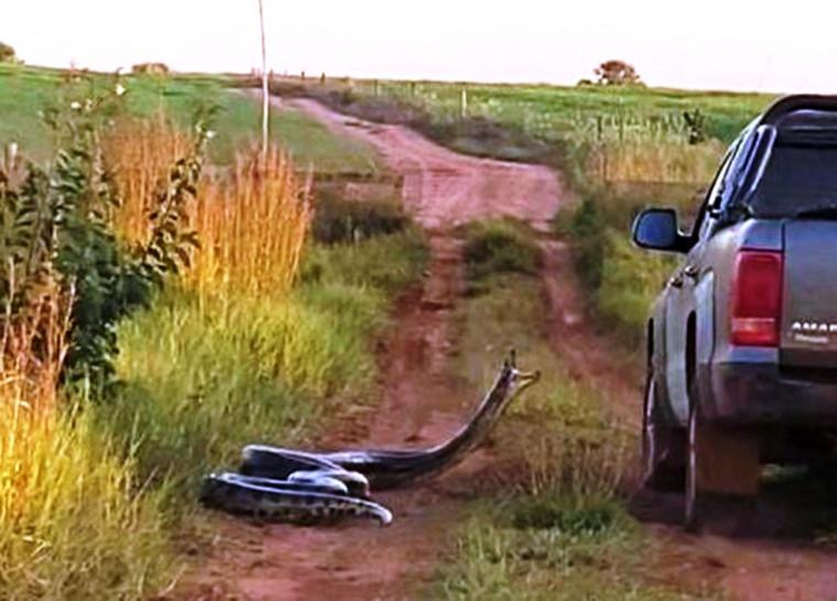A cobra já foi avistada várias vezes na propriedade
