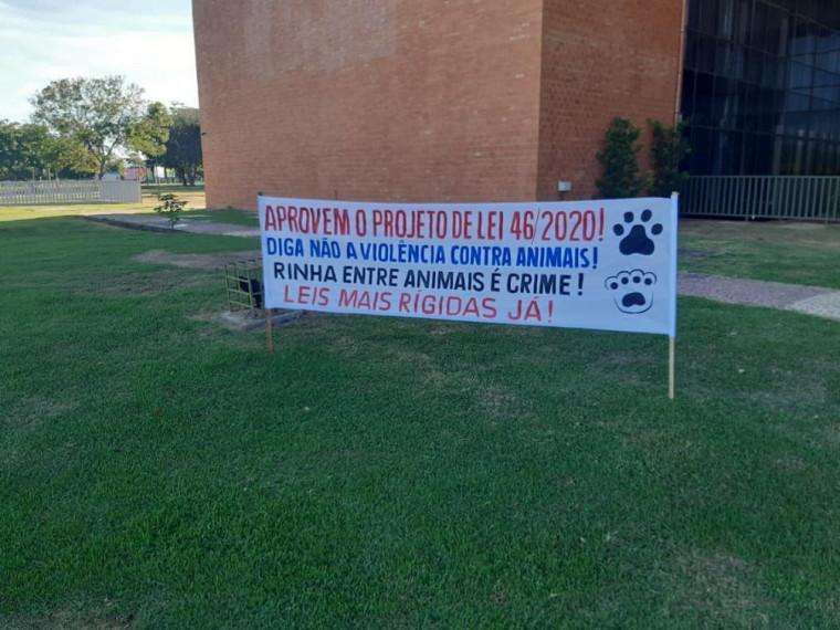 Lei aprovada proibindo rinha de cães e galos segue para sanção do governador.