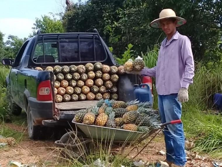 Guilherme ajuda a família na produção do abacaxi